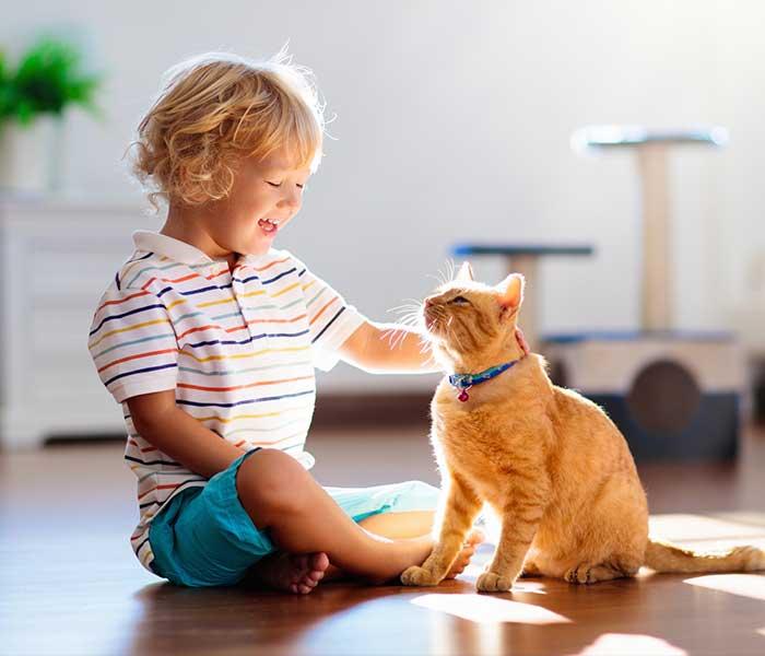 Pet-Damage-Is-Not-Your-Problem